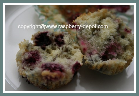 Amazing Recipe Using Wild Black Raspberries