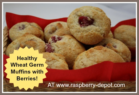 Healthy Muffins with Raspberries and Wheat Germ