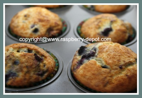 Wild Raspberry Muffin Recipe