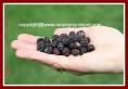 Black Raspberry/Blackcaps/Scotch Caps Variety