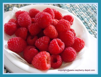 Picture of a Bowl of Fresh Picked Raspberries