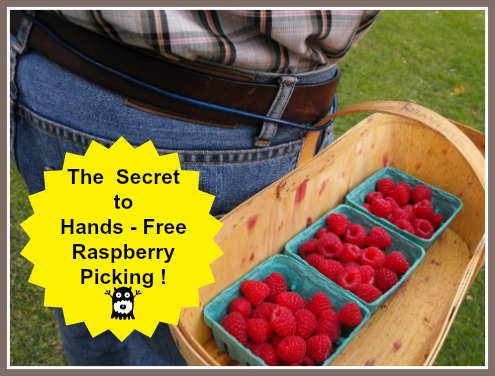 Best and Fastest Way to Pick Raspberries with TWO Hands