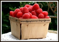 Pint of Fresh Red Raspberries Image