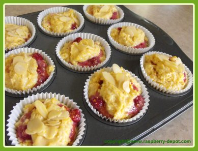 Making Raspberry Muffins - Raspberry Cornmeal Muffins Recipe