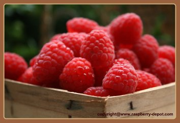 Picture of Raspberries in Wooden Pint Container