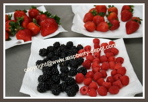 Washing Berries for a Fruit Tray