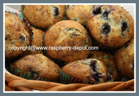Wild Raspberry Recipe - Wild Raspberry Muffins
