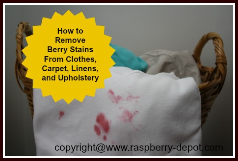 How to Remove Raspberry Stains or Other Berry Stains from clothes, carpets, linens, upholstery.