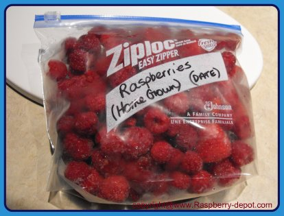 How to Freeze Raspberries Whole with NO sugar