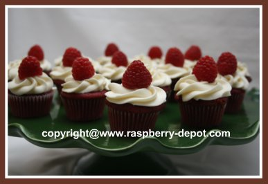 Mini Homemade Red Velvet Cupcakes with Cream Cheese Icing