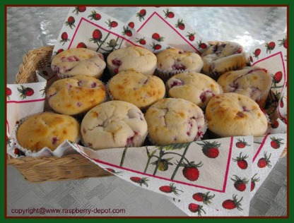 Raspberry Muffins with Fresh Raspberries