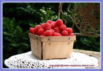 Picture /Image of a Pint of Fresh Red Raspberries in a Wooden Container